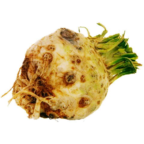 Celeriac - English New Season x 1