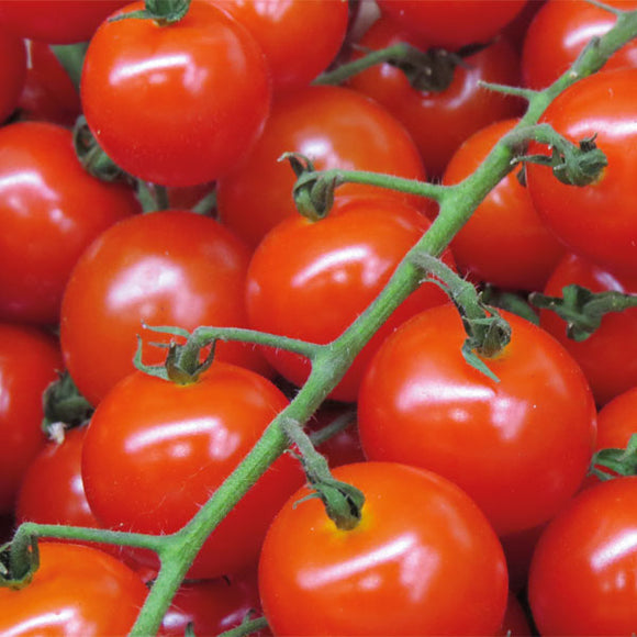Tomato, ENGLISH Cherry Vine x 500g