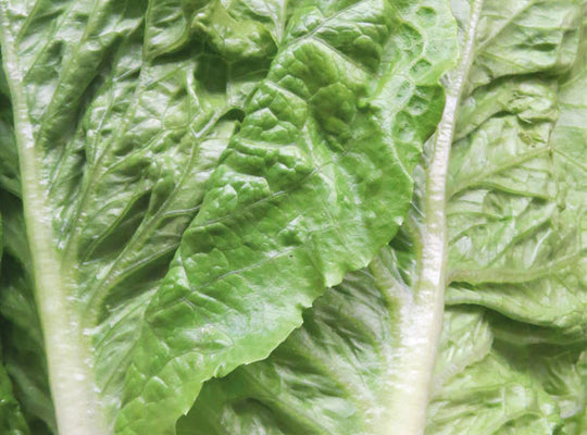 Lettuce,  Cos – each. NOW IN, LOCAL.