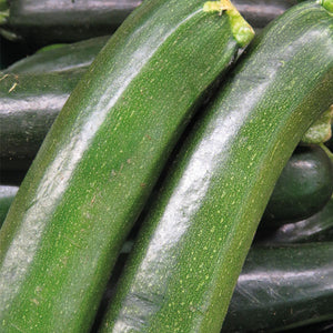Courgettes -  x 2