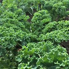 Kurly Kale x 1kg - Local Grown.