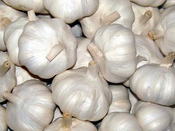 Garlic English Bulbs