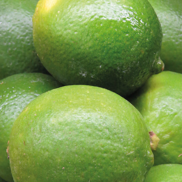 Limes - Large- 39p each or 3 for £1.00