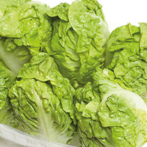 Lettuce,  Little Gem - x 1 pkt