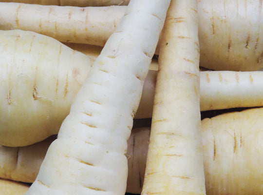 Parsnips - English - x 3