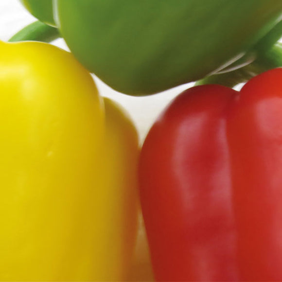Pepper Mixed Traffic Lights