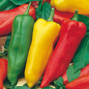 Peppers Romano Sweet - x3