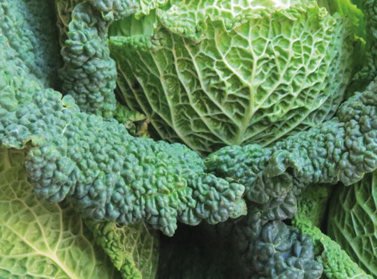 Cabbage Savoy - LOCAL GROWN x Each