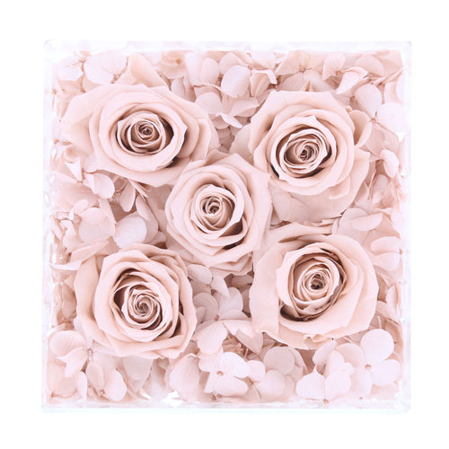 Hydrangea & Rose (Clear Box)