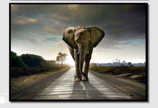 Love Elephants??? The you'll love this HD walking Elephant framed picture displaying A beautiful image with  intense colours and modern designs, its sure to bring any home or office space to life.