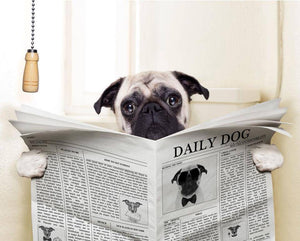 "Are you a Dog Lover??? Then this funny dog Print is a must have from Giftworks. Pug dog Wall Art holding a copy of the newspaper isolated on white background. The headline on the front ""Daily Dog"" Wonder what is making this dog so interested? Possibly the article on How To Get Famous. Great for laughs and an instant conversation starter."