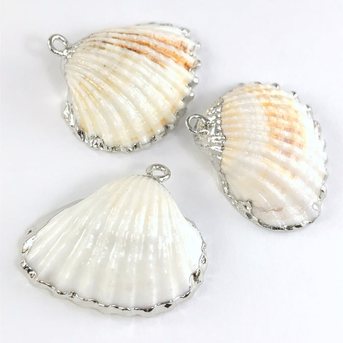 natural white seashells with silver trim and bails for pendants