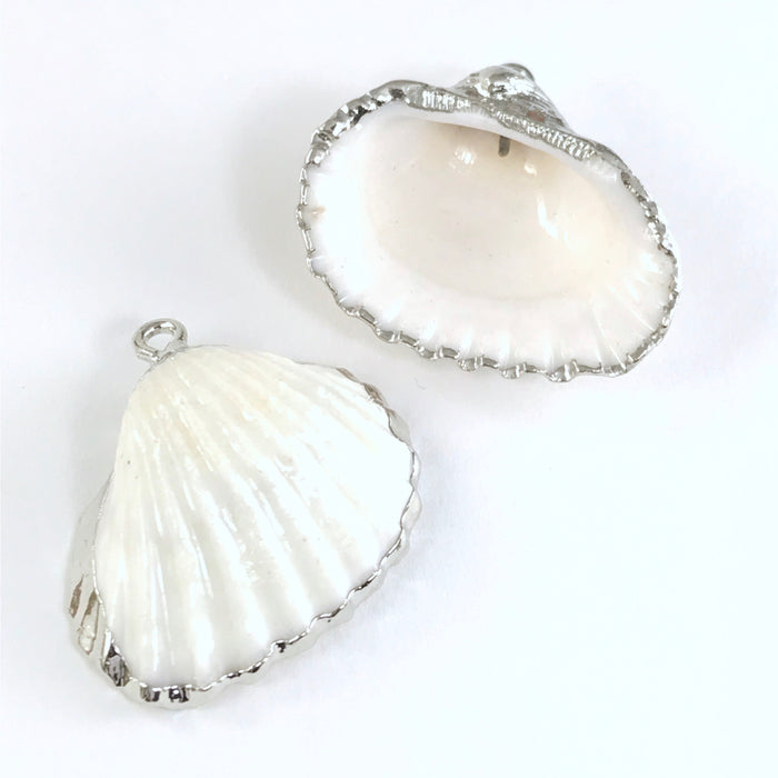 front and back of natural white seashells with silver trim and bails for pendants