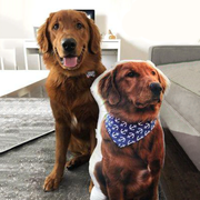 Turn your pet photo into a pillow today! Gifts for Dog Owners bunny owners and Personalized gift for mom as puppy lover - The Pet Pillow
