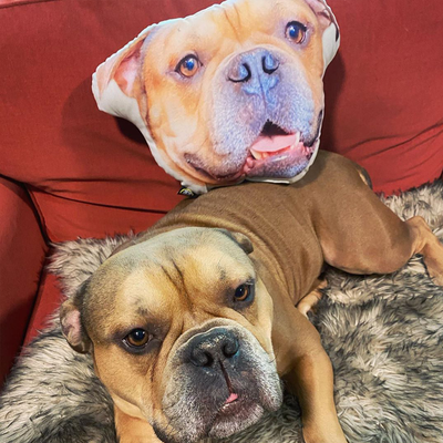 Custom Pet Face Shaped Pillow from Your Pet Photos, Customized Pet Head Pillows - The Pet Pillow