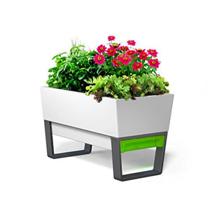 Glowpear Urban Garden Self-Watering Planter