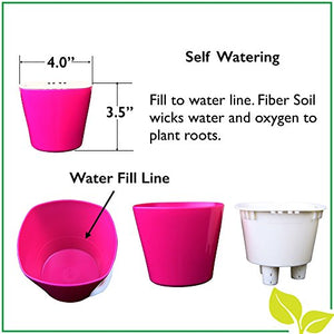 "Self Watering Mini 3.5"" Planter Pots (3 Pack PURPLE) Grow a Indoor Window Sill Garden. Perfect for Potting Smaller House Plants, Herbs, African Violets, Succulents, Flowers or Start Seedlings."
