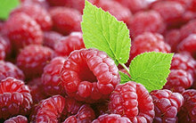 "Load image into Gallery viewer, 4 Heritage Red Raspberry Plants, bare-root LARGE 2-year 18-24"" trimmed canes"