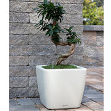 "Aquaphoric Self Watering Planter (11"") + Fiber Soil = Foolproof Indoor Home Garden. Modern Decorative Planter Pot for All House Plants, Flowers, Herbs, Vegetables, Tropical. Easy/Looks Great."