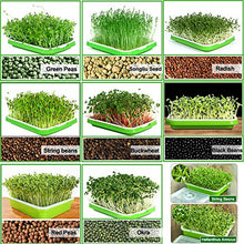Load image into Gallery viewer, Seed Sprouter Tray BPA Free PP Soil-Free Big Capacity Healthy Wheatgrass Grower with Lid Sprouting Kit 13.4x9.84x4.72in(LxWxH)