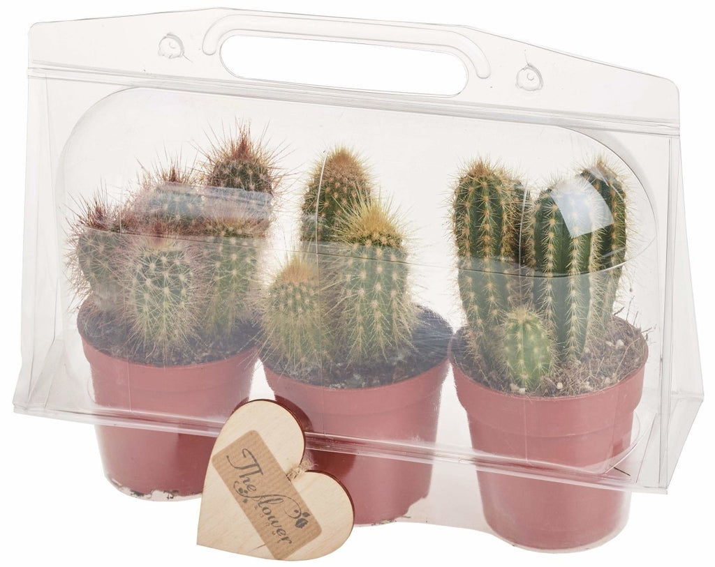 Simply Cactus - Set of 3 Cactus Plants in Protective Sleeve Gift Packaging - The Gift Project