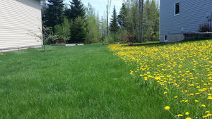 Weed Control Program for Small Lawns