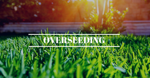 Overseeding for Small Lawns