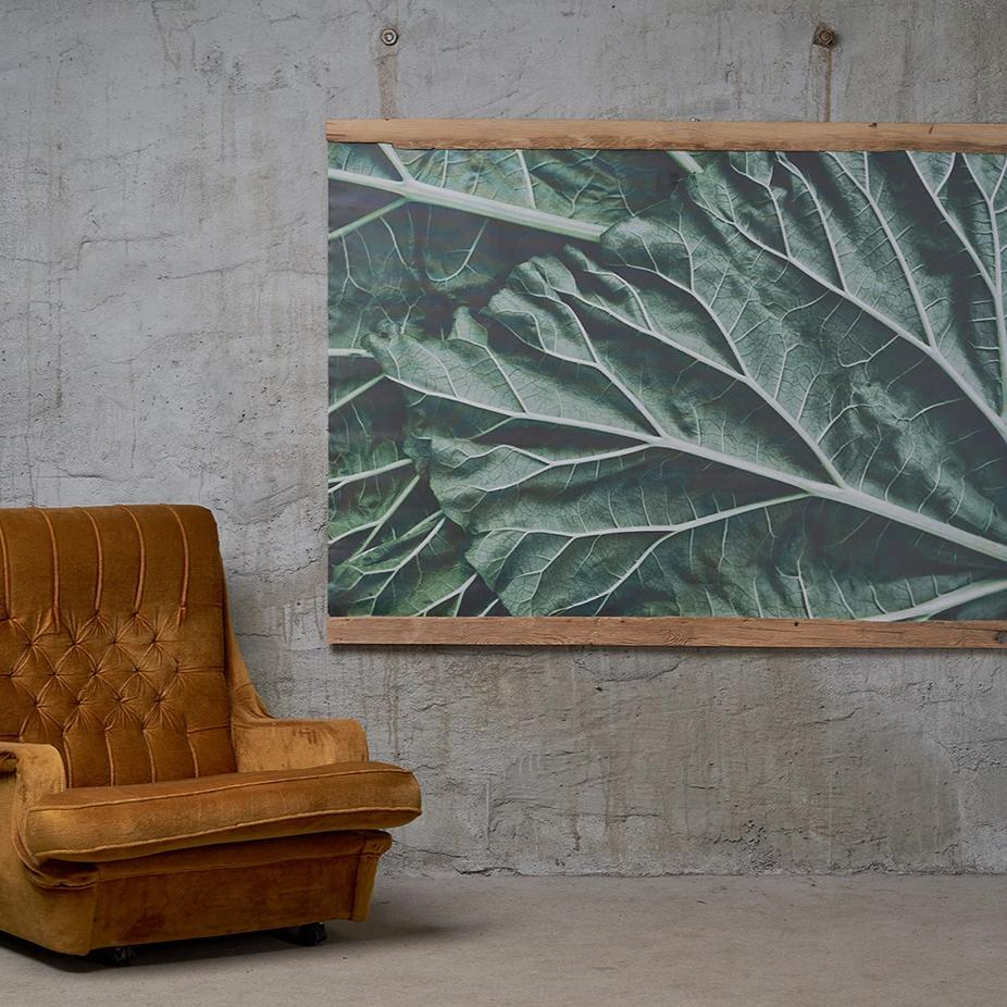Canvas art, rhubarb leaves, photo by Anna Maskava. Wooden frame born in year 1790, Bauska disctrict