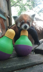 Create an Animal Enrichment