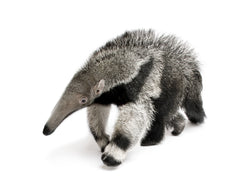 Anteater Behind the Scenes Tour