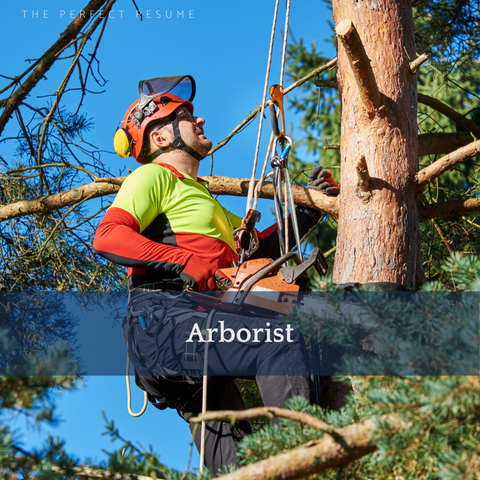 The Perfect Arborist Resume Writing Tips