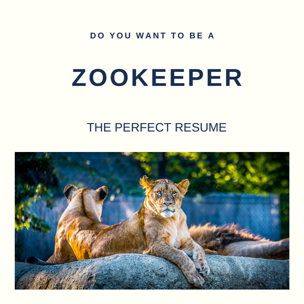 Zookeeper Resume Writing Services