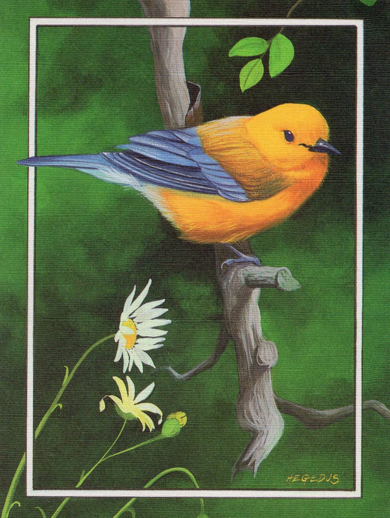 Orange Chest Bird Birds Lover Collection Blank Art Greeting Card illustrated by