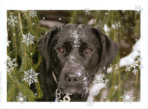 Pets Dogs Lover Christmas Blessings Holiday Seasons Happy New Year Greeting Card