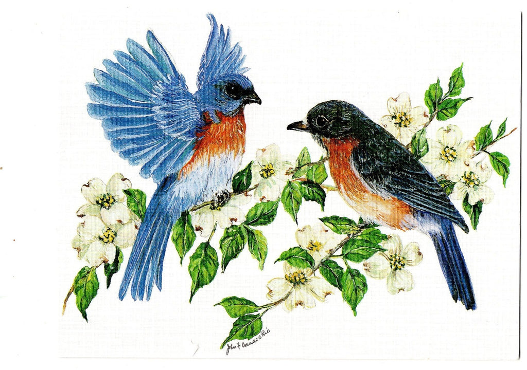Eastern Bluebird Birds Lovers Collection Blank Art illustrated Greeting Card