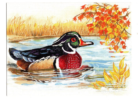 Wood Duck Aquatic Birds Lovers Collection Blank Art illustrated Greeting Card