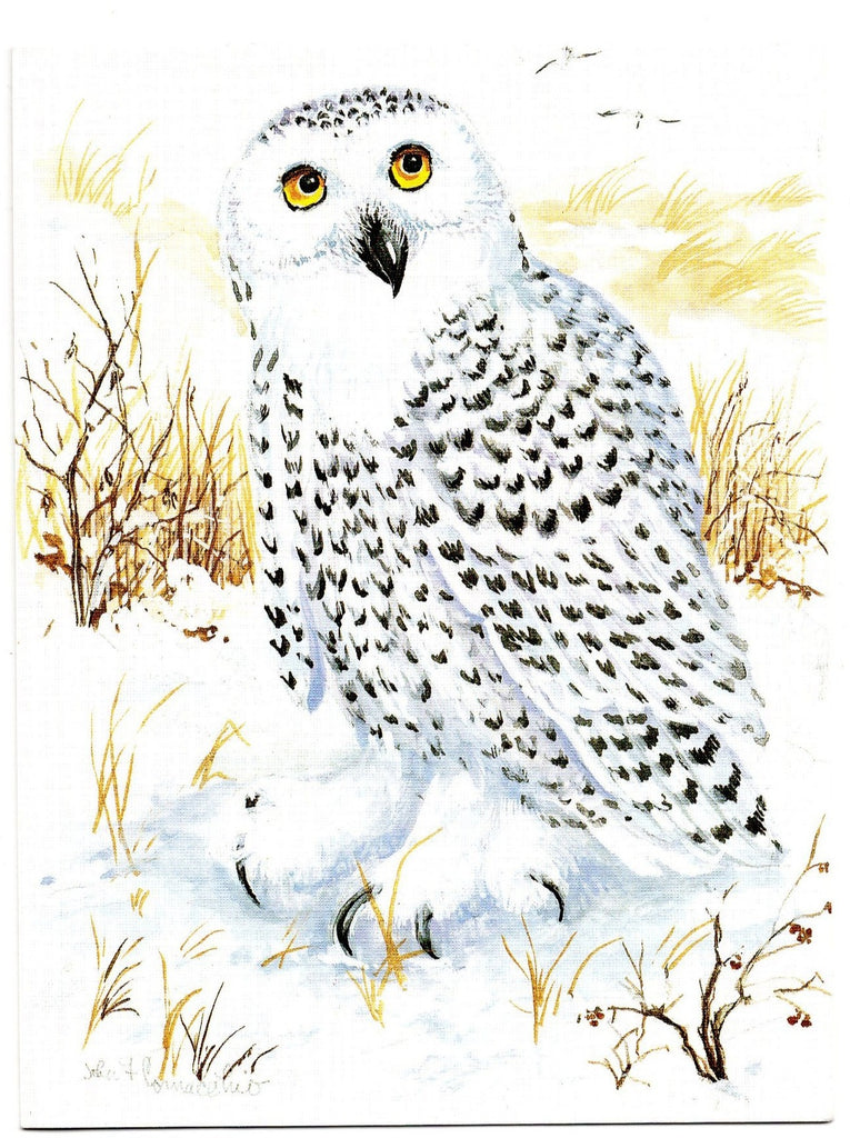 Snowy Owl Bird Birds Lovers Collection Blank Art illustrated Greeting Card