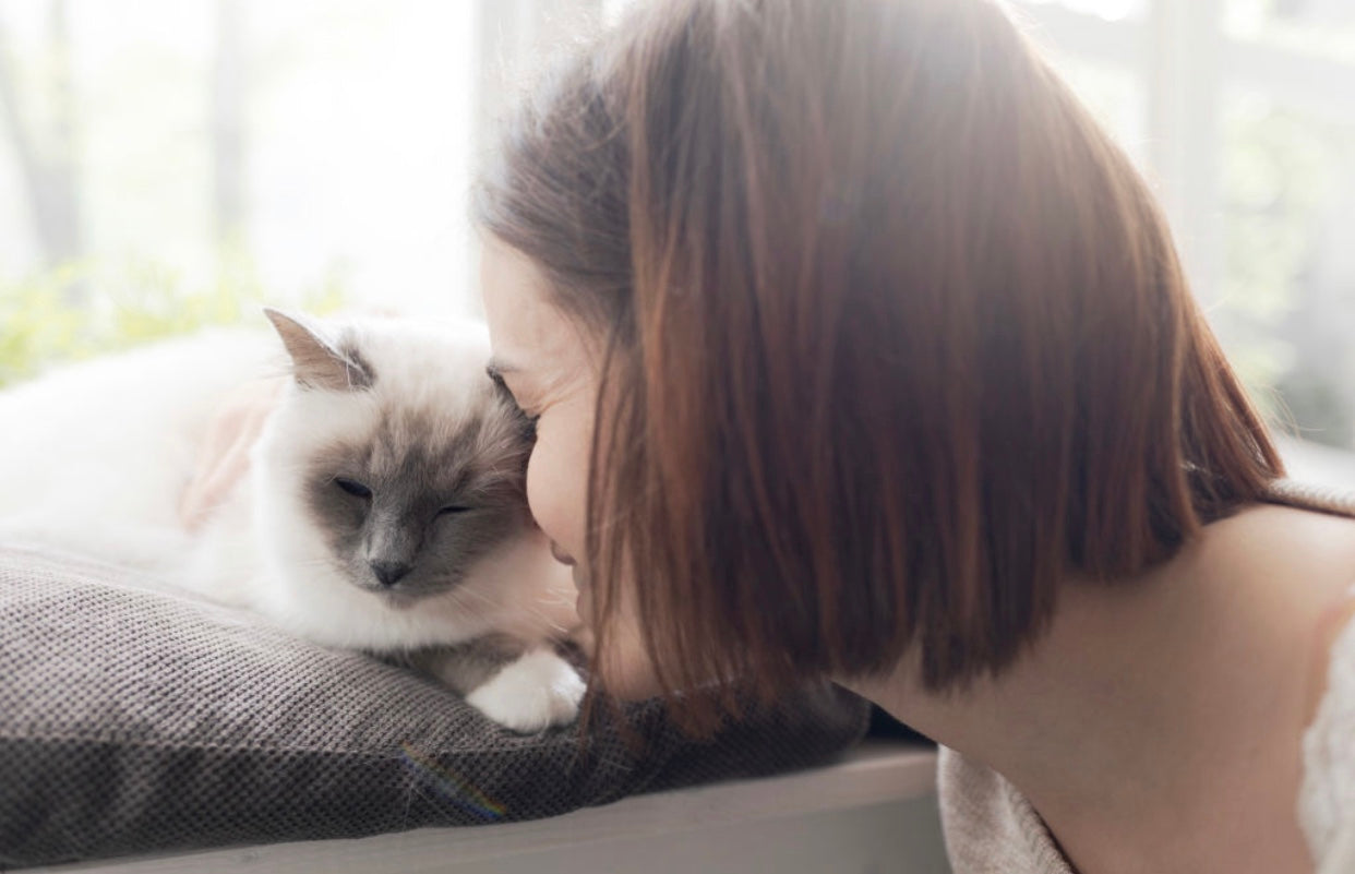 15 signs you are the BEST cat mum