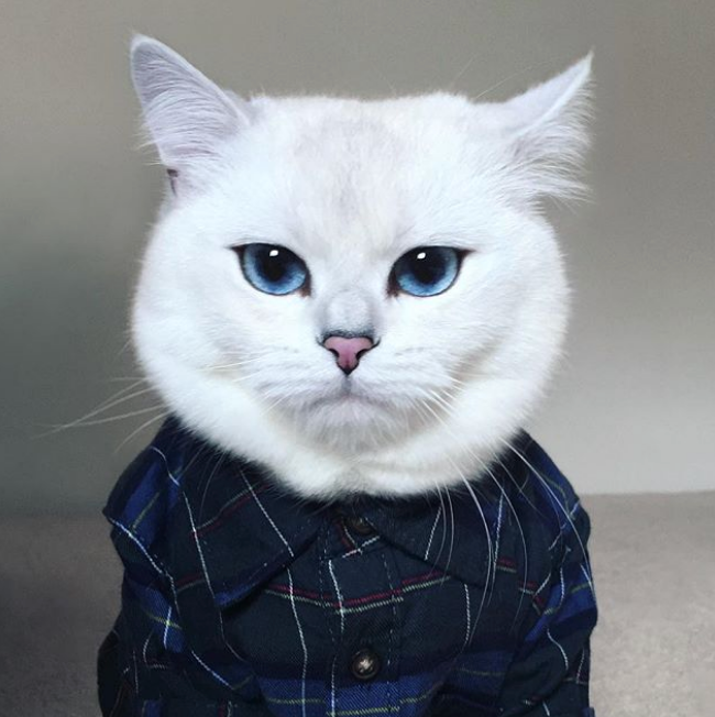 20 Superstar Cats You Should Be Following (2019)