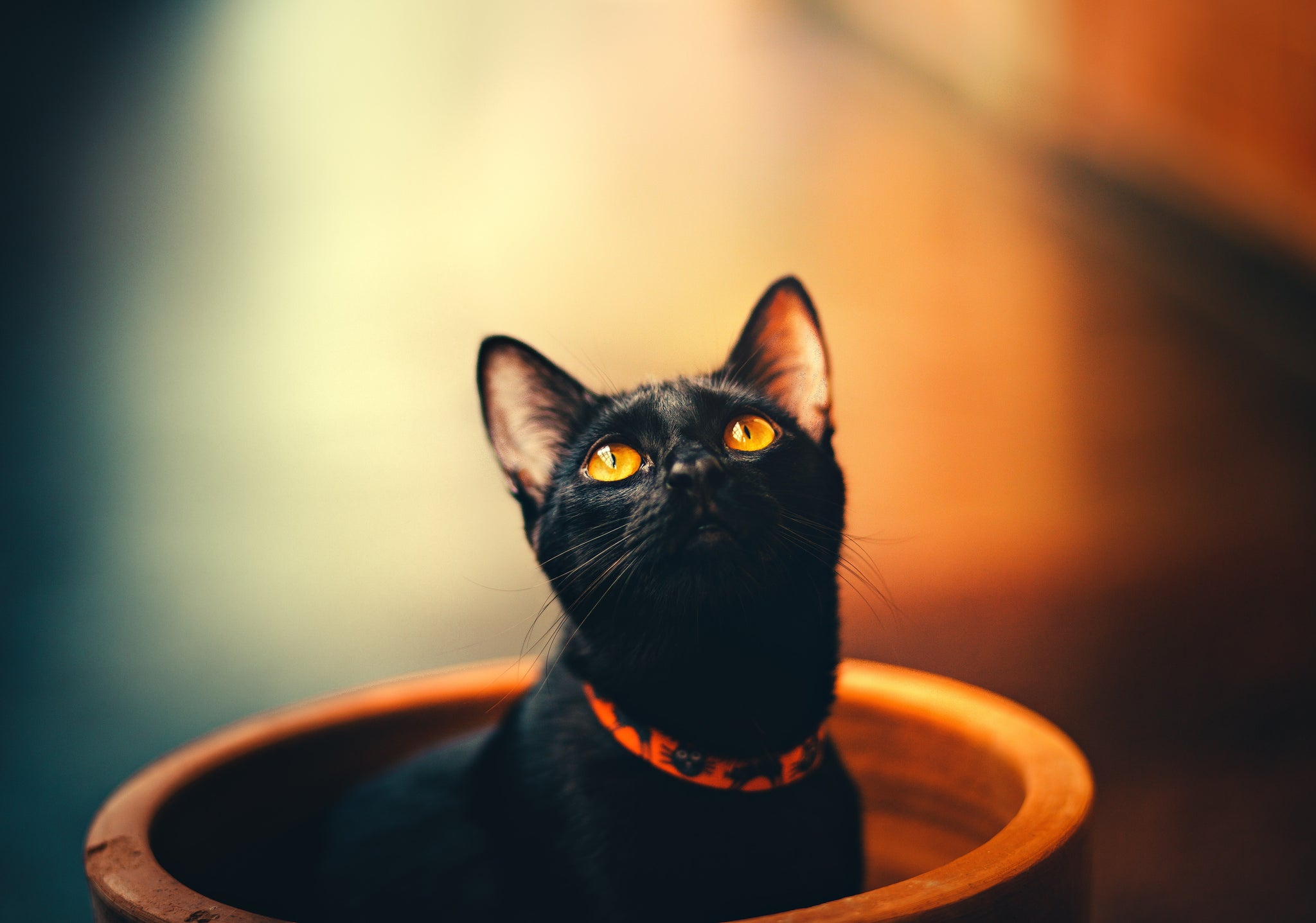 black cat in plant pot