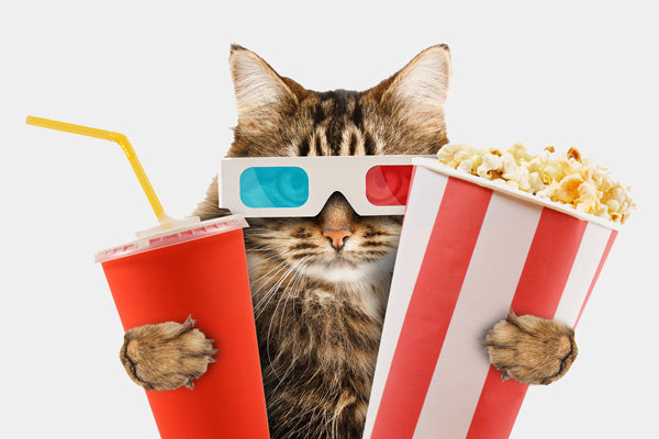 cat with popcorn and drink