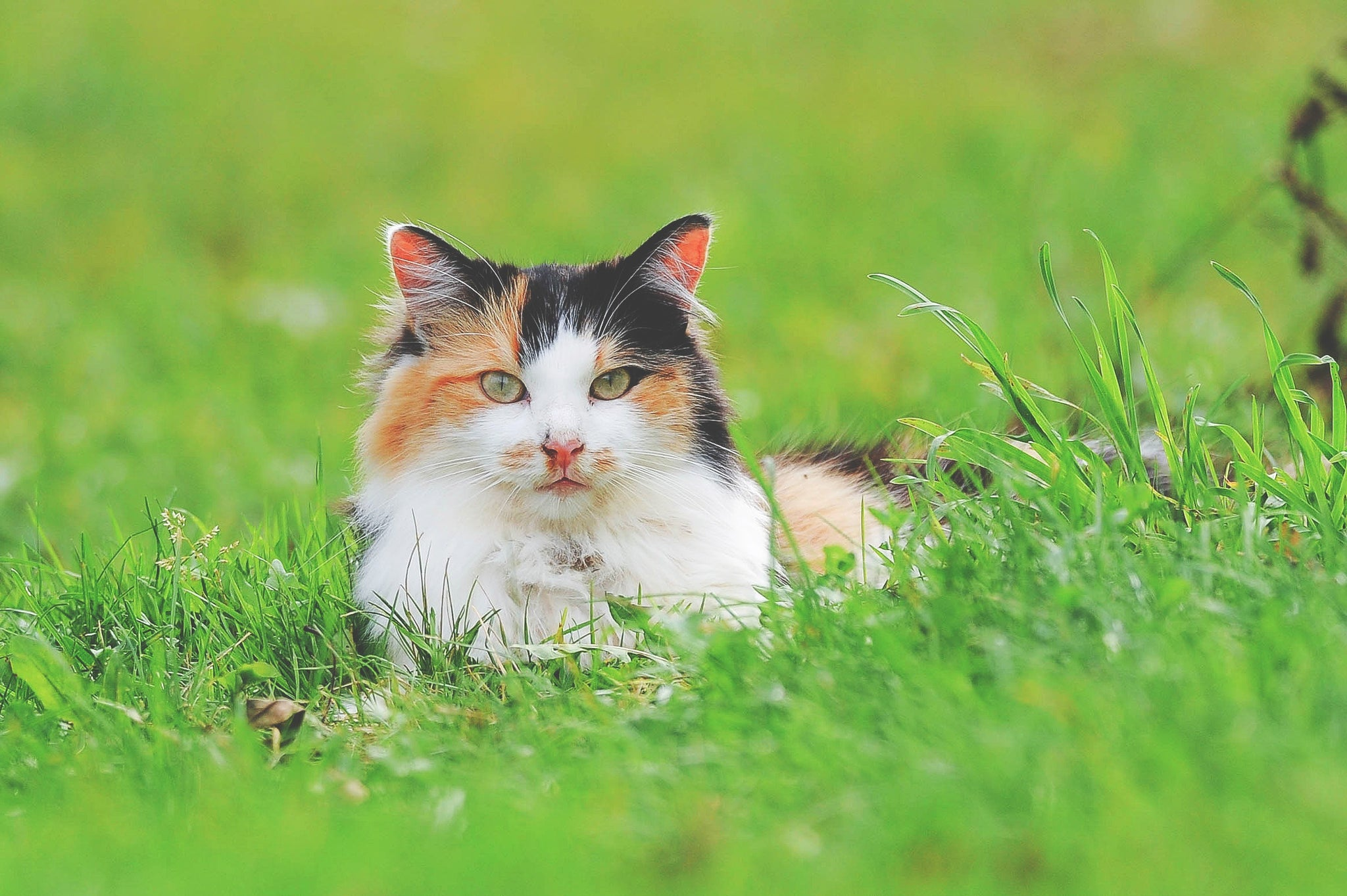 multi coloured cat sat in the grass