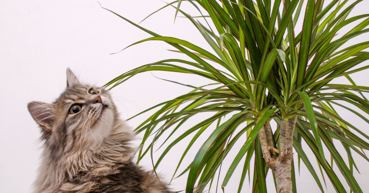 Cat and a plant