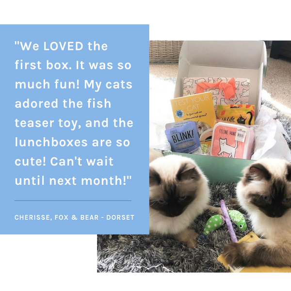 Review for gus and bella box