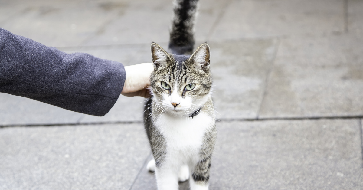 person stroking cat