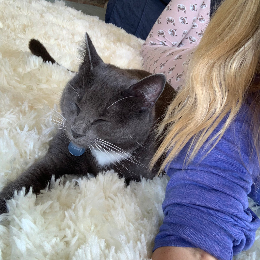 grey cat bella with blonde girl