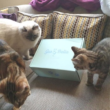 3 cats surrounding their cat box