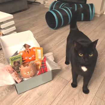black cat stood with January gus and bella box