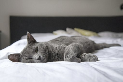 grey cat asleep on white bed