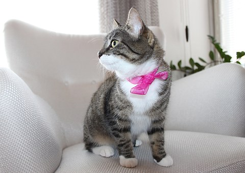 tabby cat wearing a pink bow